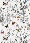 2704420,F.Sch,BirdsandButterflies,MultiOnWhite,WP